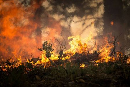 Brand in Wald
