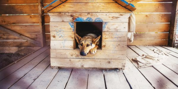 Lonely dog watching out of his kennel - 1
