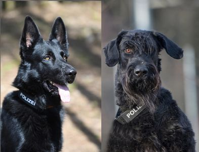Polizeihunde Wyk und Harvey
